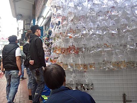 熱帯魚ストリート。売り方が変わってる。
