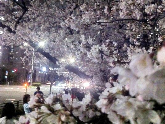 皇居周辺には花見客が。