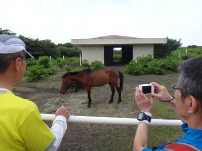 下山中に馬がいた