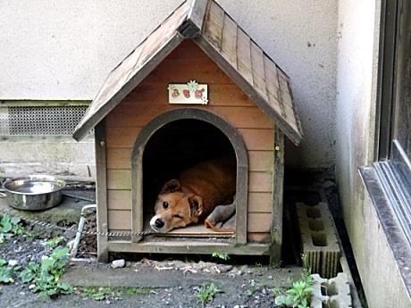 温泉で飼われてる犬