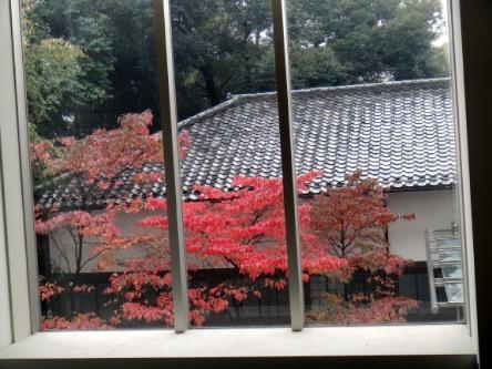 大学の紅葉が綺麗