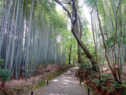 さすがに竹の寺