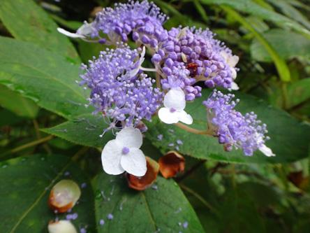昨日見っけた不思議な花