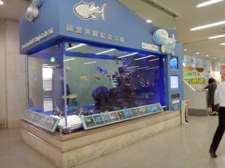 昔と変わらない水槽だけど、ジンベイザメがついた