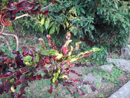 くるくる葉っぱの植物