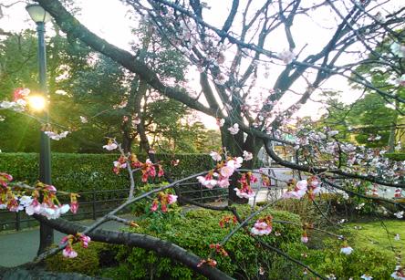 公園では梅が咲いとる