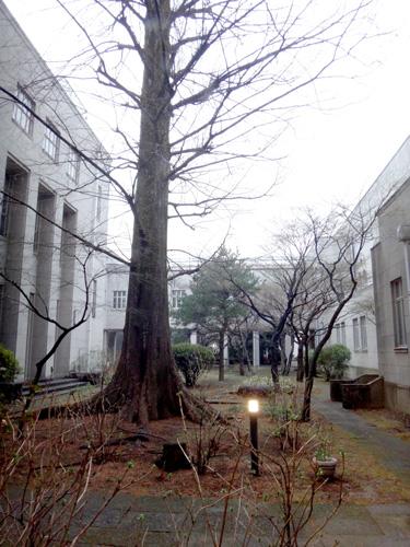 なんとなく学校の中庭