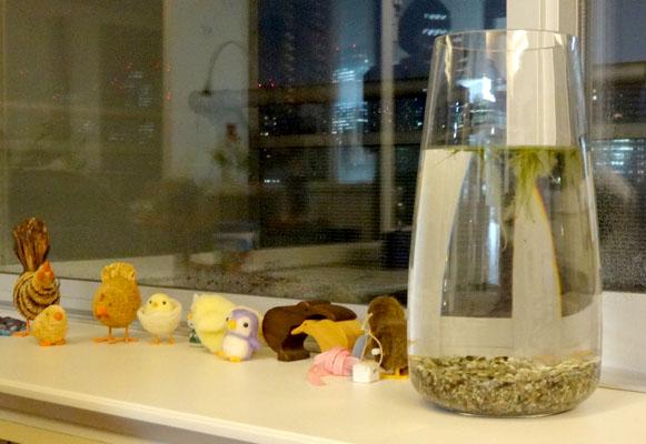 メダカハウスと小鳥のコミューン