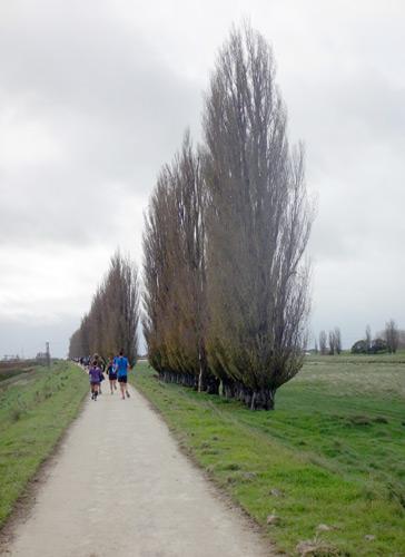 特徴的な木々が並んどる
