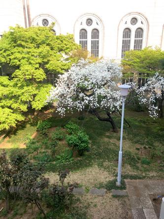中庭の白い花が綺麗
