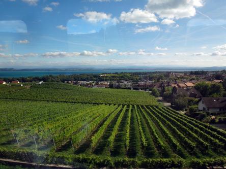 世界遺産のワイン畑