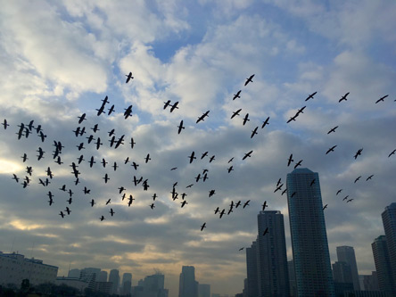 なぜか鳥がいっぱい