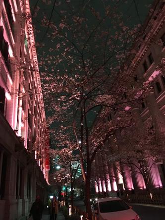 室町の桜のライトアップ