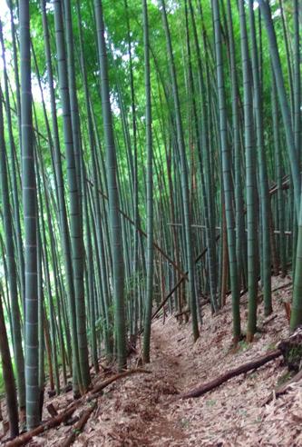 竹林もある