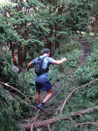 倒木をこなすトレイルランナー