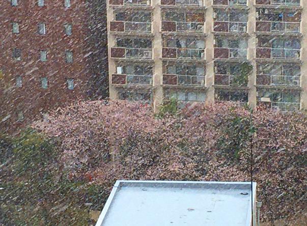 桜と雪を同時に見れる