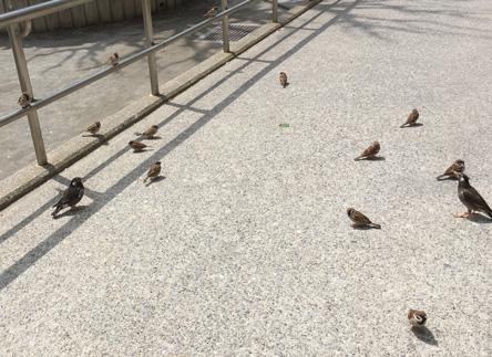 鳥と遊びながら鳥ごはんw