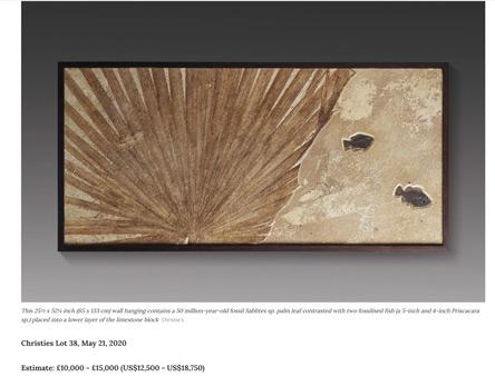 クリスティーズでサカナと葉っぱの化石が出た。約200万