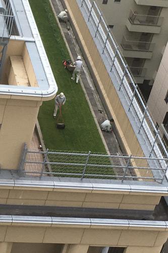 屋上の芝は天然だった(^o^)