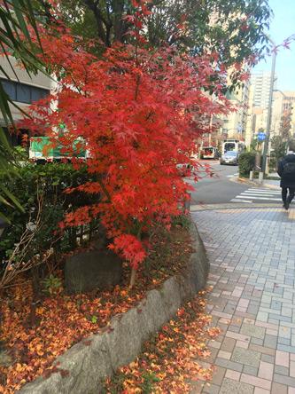 路上の紅葉が鮮やか